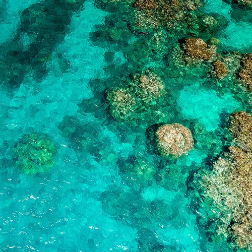 Calypso Dive and Snorkel Port Douglas